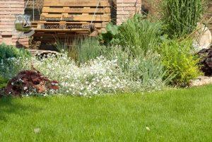 Gyepszőnyeg és füvesítés Budapest és Pest megye | Durucz kert