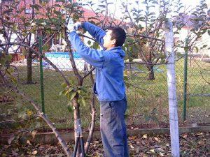 Tavaszi metszés, permetezés | Kertépítés és kertfenntartás | Durucz Attila