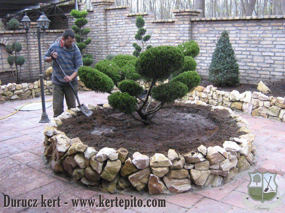 Kertépítés: Bonsai a kertben