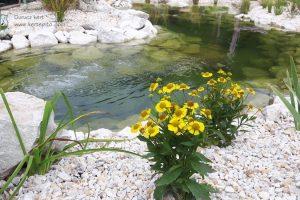 Kerti tó növényei
