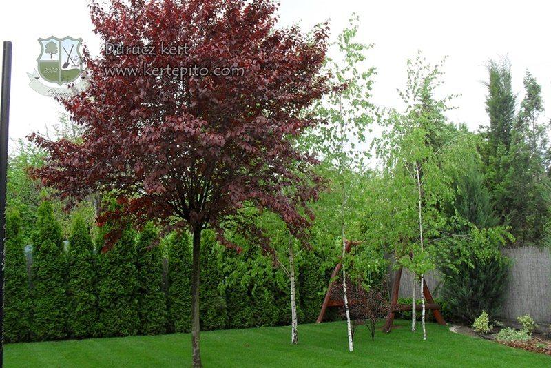 Fákat a kertbe
