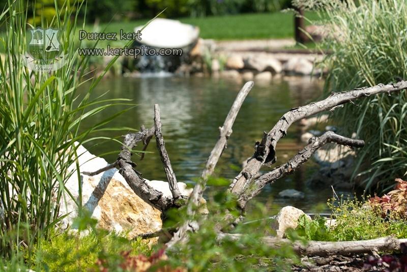 Kiszáradt fa a kerti tó partján
