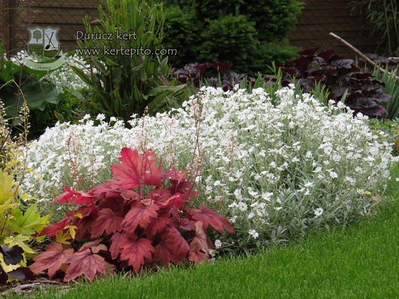 Szép növények a kertbe