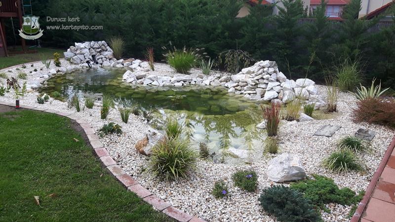 Ritka növények a kerti tó partján