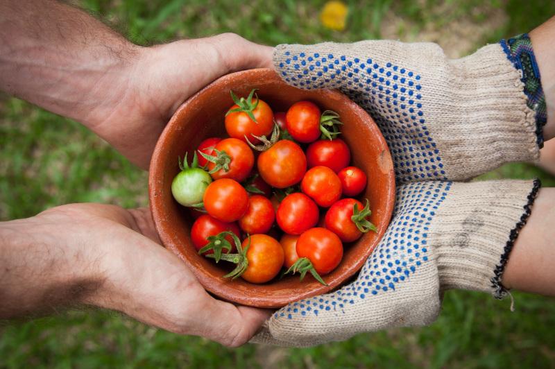 munkakesztyű kiválasztása kerti munkához